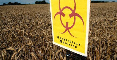 Monsanto-Launches-Damage-Control-Over-GMO-Cancer-Study-400x206